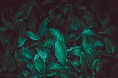 The fresh green
