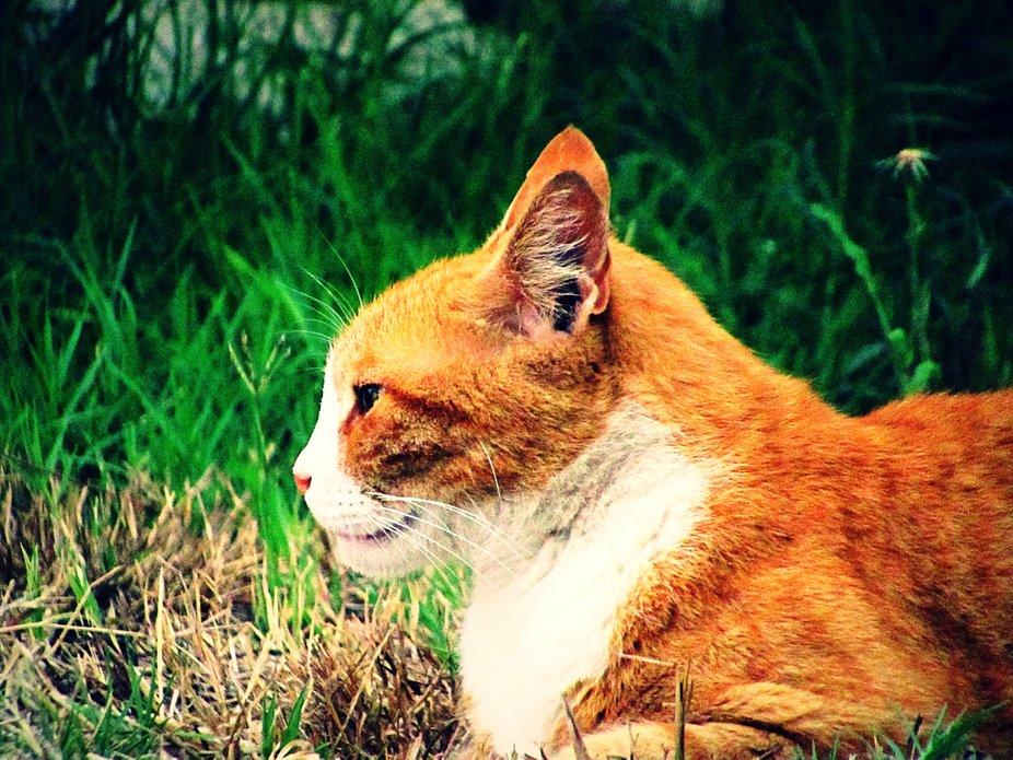 Peaches the Cat