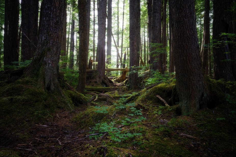 Part of the old growth forest area on the island of Hoonah, Alaska.