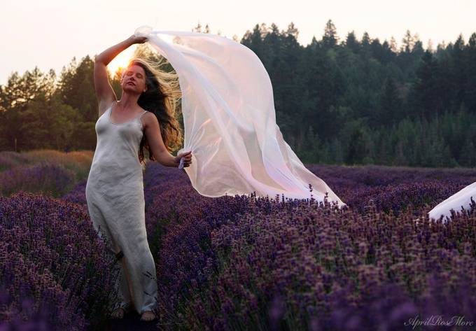Catching the Lavender Scented Wind by AprilRoseMore - Wind In Nature Photo Contest