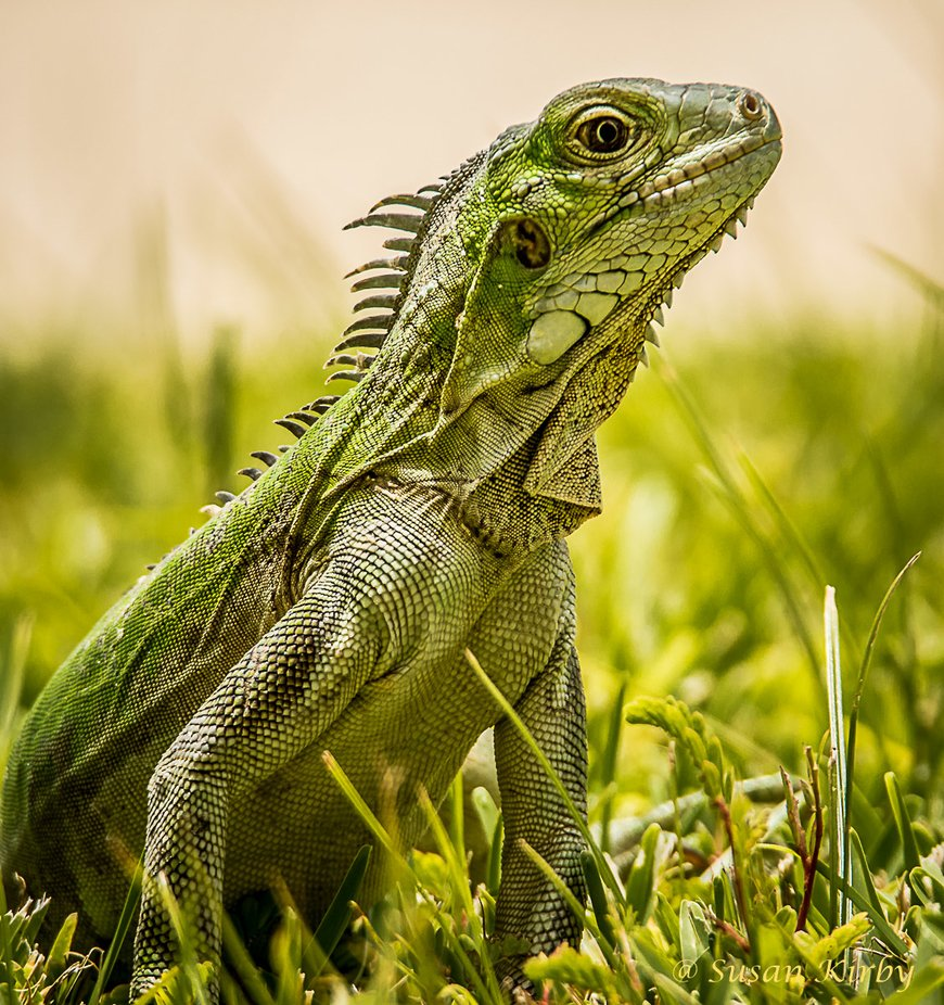 Green Glow by naturallight - Reptiles Photo Contest