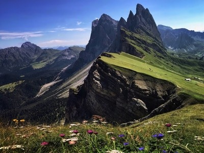 WILDFLOWERS AT SECEDA - DOLOMITES, ITALY