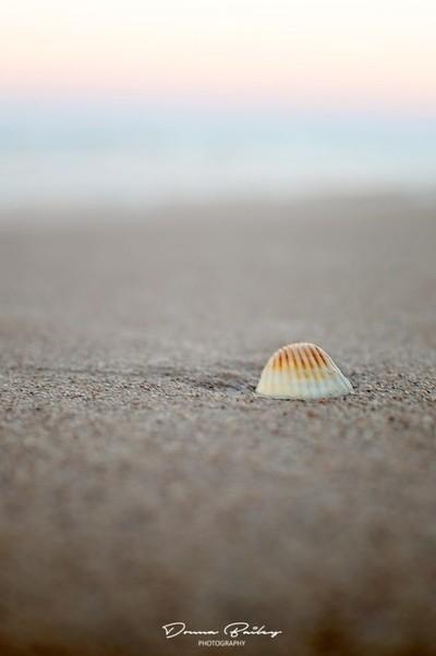 Solo Shell