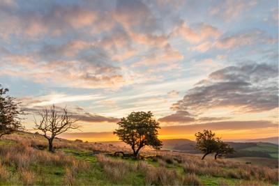 An early morning walk along the Lancashire Moors.