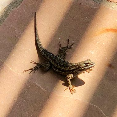 Southern Cal patio resident!