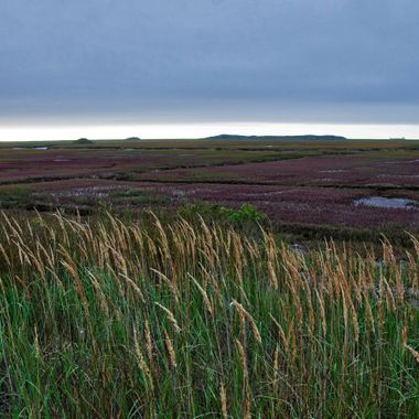 Saint's Rest Marsh, Saint John, NB, Canada on an overcast morning.