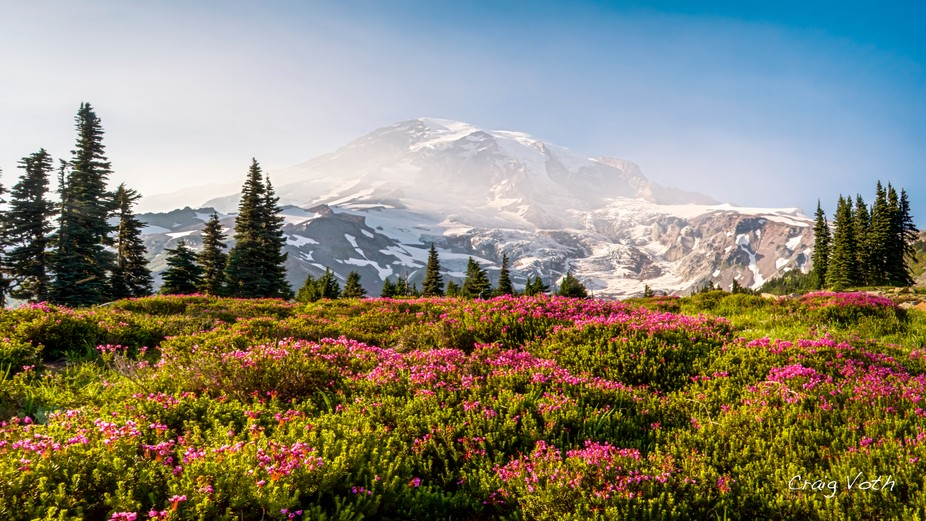 Wildflower meadow at Paradise, Mount Rainier National Park
