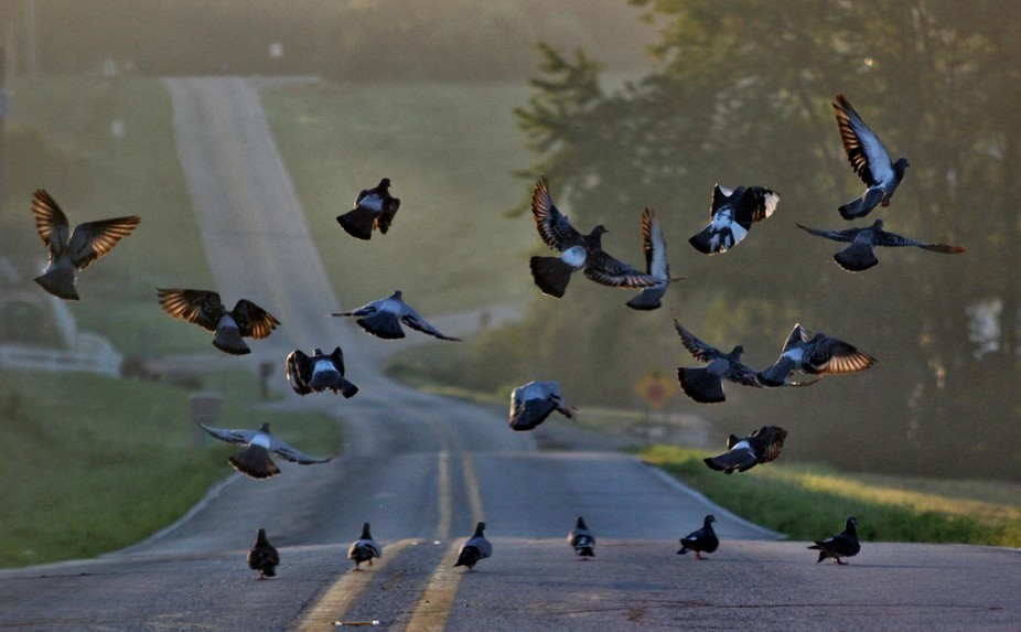 I managed to capture these pigeons just as they were taking flight pretty awesome shot.
