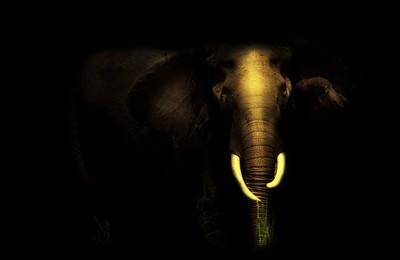black-elephant3