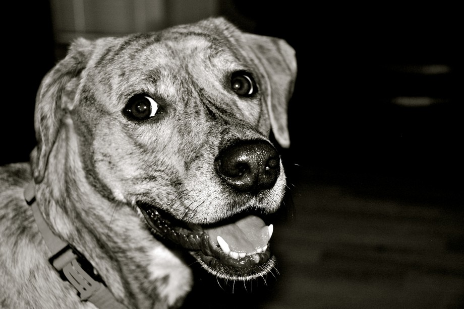 She was a very expressive dog!  We miss her.
