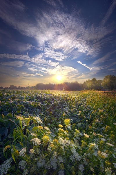 Every Sunrise Needs Its Day