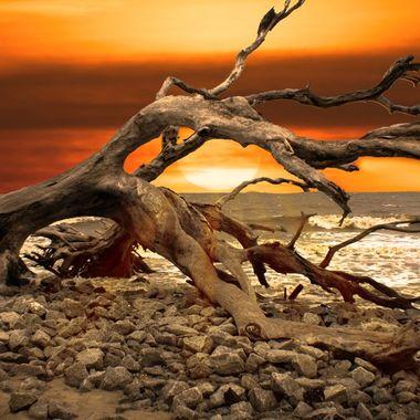 DriftwoodBeachJI
