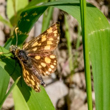 0P6A8767-2 Moth