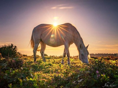 Sun Rays on Horseback