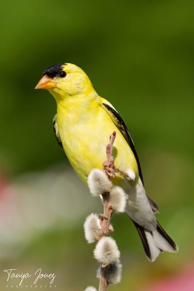 Finch Perch