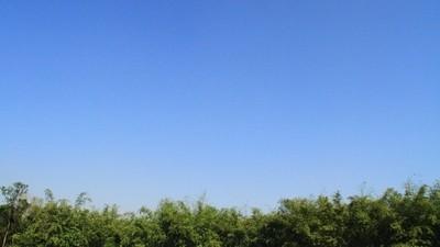 Blue Horizon Over Bamboo Garden