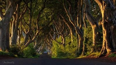 Dark Hedges North Irland