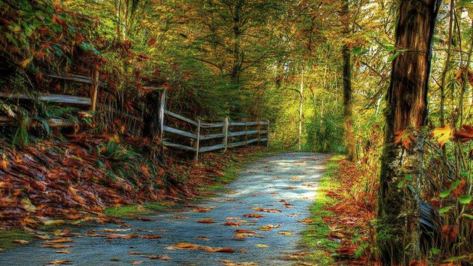 Fenced Autumn by Dawn van Doorn.