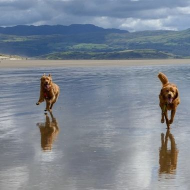 Dogs on Porthmadog beach.