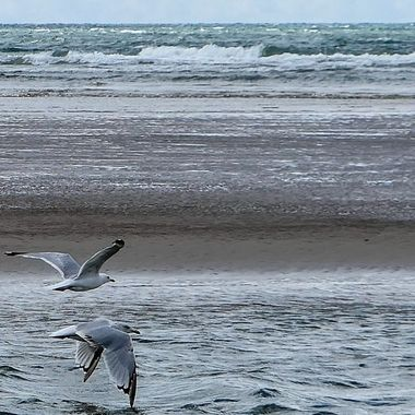 Seagulls flying over Porthmadog beach, Wales.