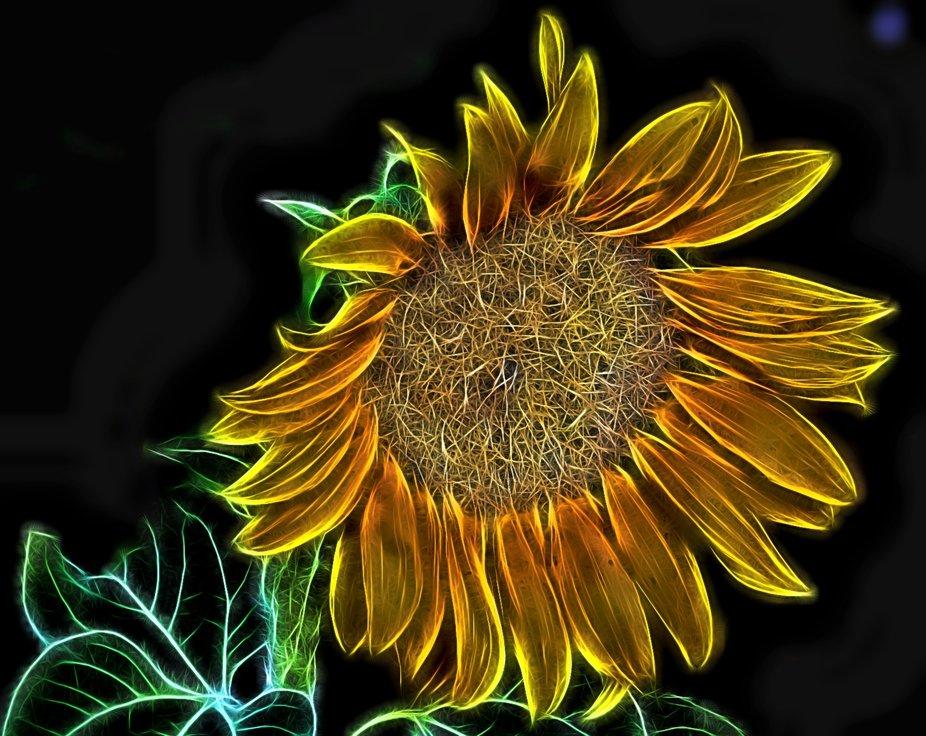 Sunflower Glow by Dawn van Doorn.