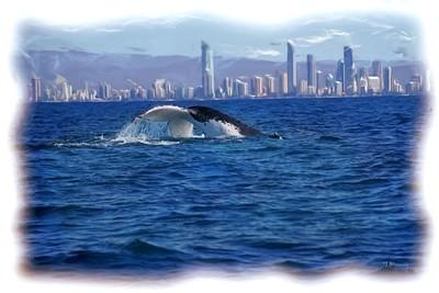 Humpback Migrating North