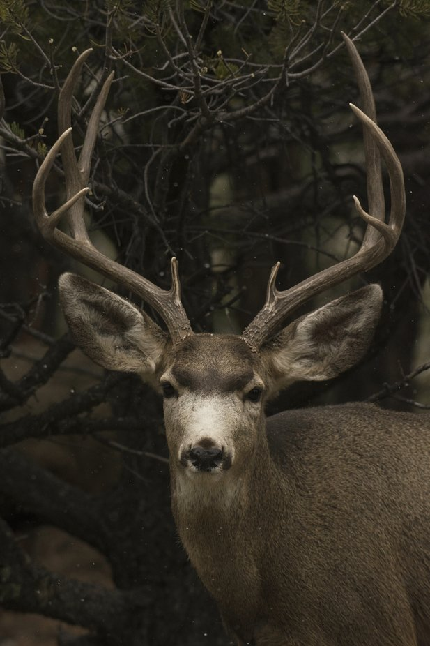 Buck by ericakinsella - Monthly Pro Photo Contest Vol 44