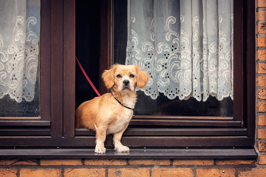 A sweet dog watching the streets of Antwerp