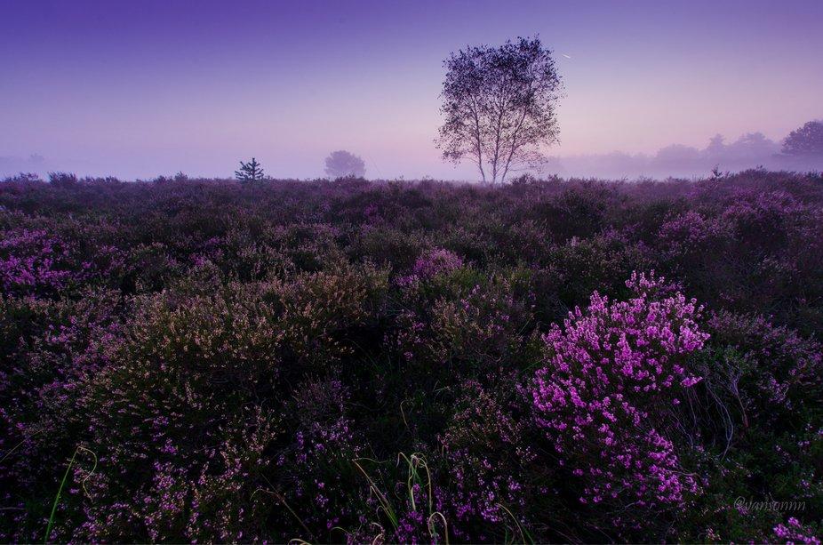 Purple landscpae