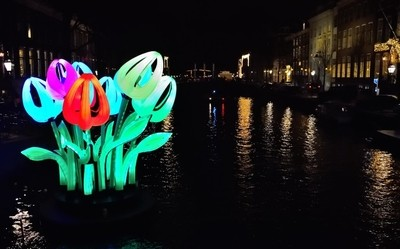 tulips in the Amsterdam canals