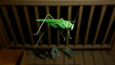 You Have Much to Learn Grasshopper