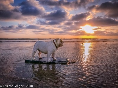 POINT BREAK (dog edition)