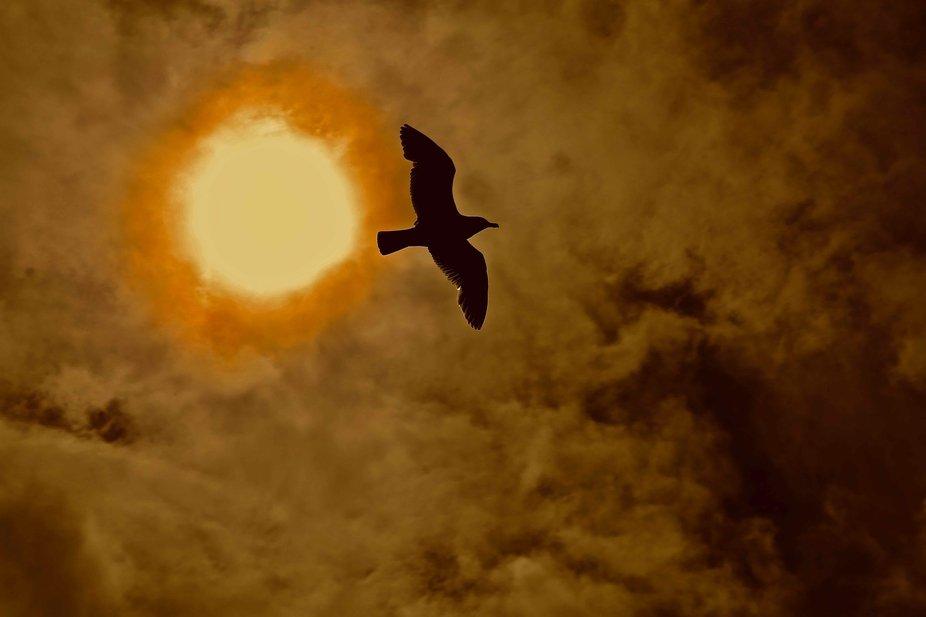 Flying thru the Sun