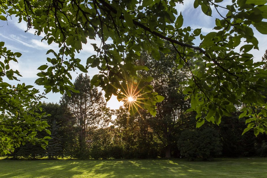 Landscape featuring a centre sun flare, green leaves, green grass, and blue sky. Beautiful summer...
