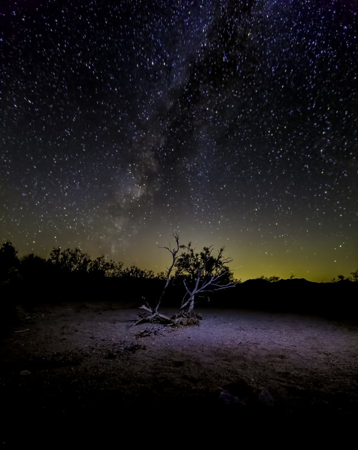 Lone Twig by SteBil30 - Capture The Milky Way Photo Contest