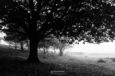 Under The Tree Bergerheide