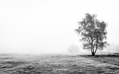 Misty Silhouettes Bergerheide