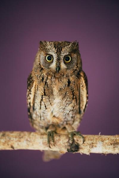 Owliver