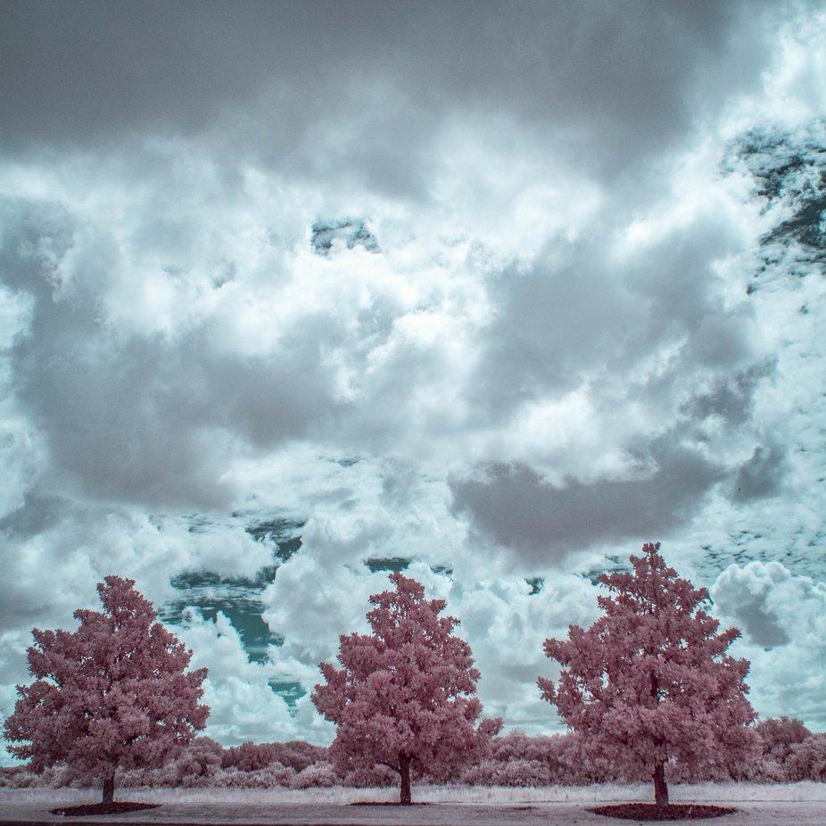 Three little trees.