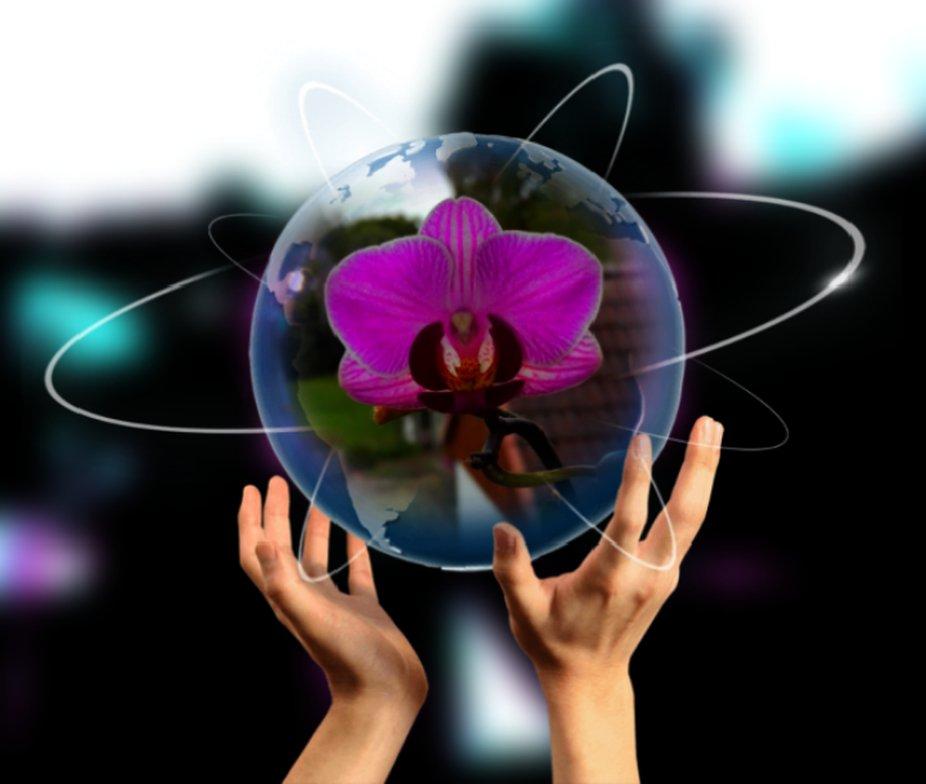 Orchidee in der Glaskugel