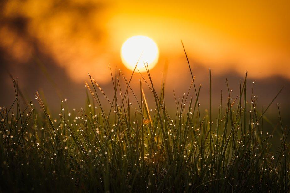Macro shot at sunrise