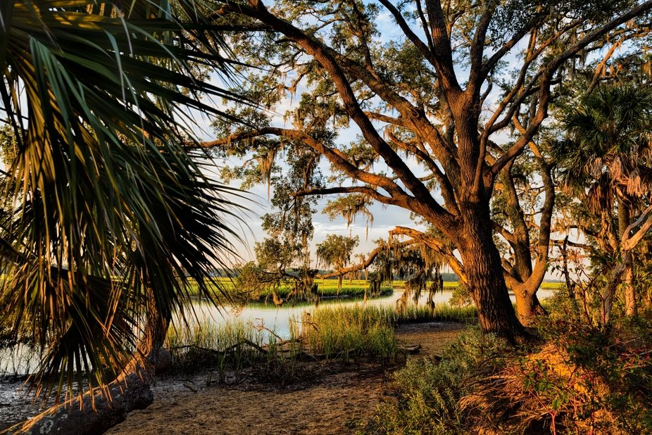 Taken on Edisto Island, South Carolina.   The sun was perfect and lit everything so well that I h...
