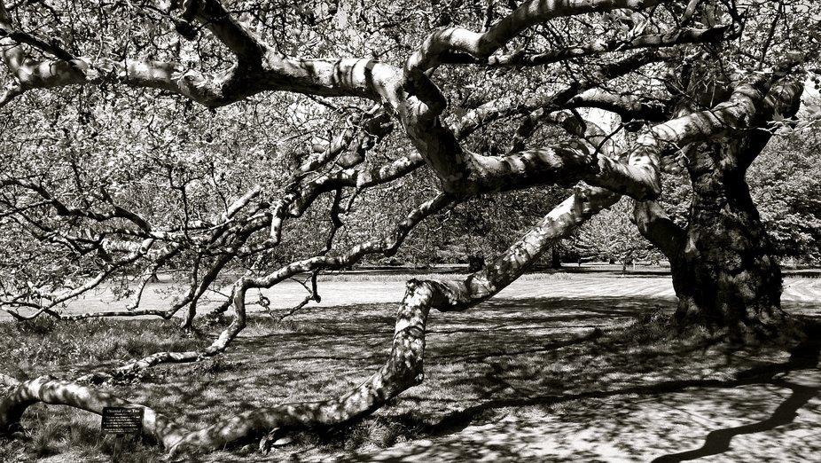 Branching Out : B&W