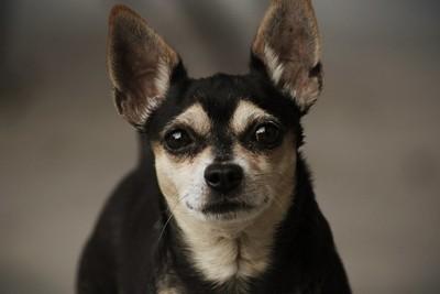 My Dog (: