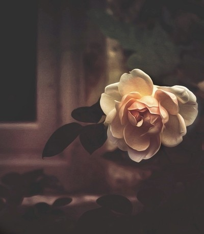 Serene petals