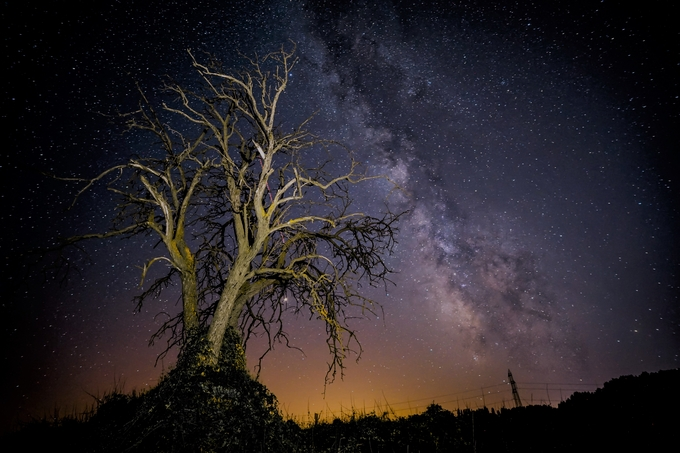 The old tree. by lourdesortegapoza - Night Wonders Photo Contest