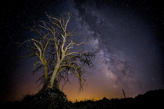 The old tree. by lourdesortegapoza - Night Wonders Photo Contest