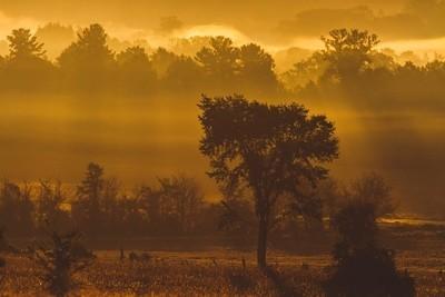 Foggy Midland morning 2