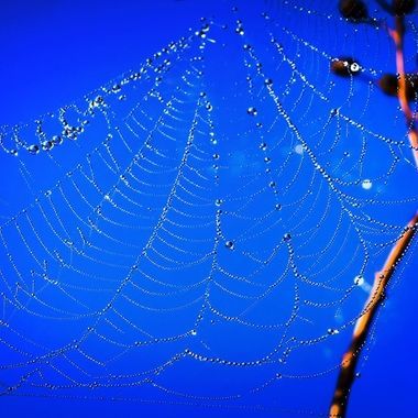Wonderous Web