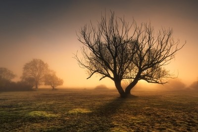 Mysterious tree...